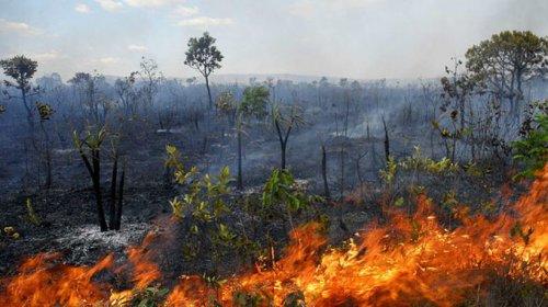 [Governo suspende a prática de queimadas em todo o país por 60 dias]
