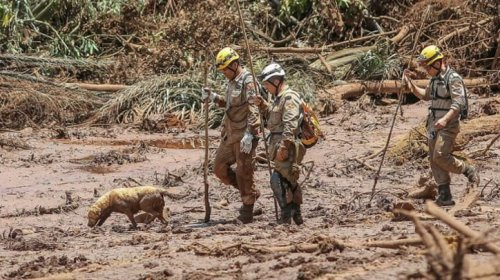 [Brumadinho: cães e gatos resgatados da lama irão a feira de adoção]