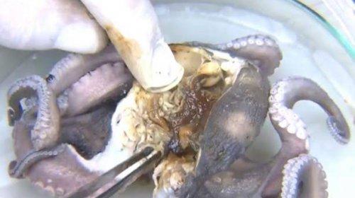 [Pesquisadores da Ufba encontram óleo em aparelhos digestivos e respiratórios de peixes e maris...]