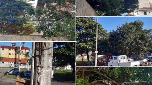 [Falta de poda em árvores, manutenção em postes preocupa moradores de ruas em Armação ]
