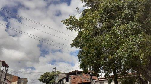 [Fotossíntese do perigo: árvore causa pânico aos residentes de Mussurunga; veja]