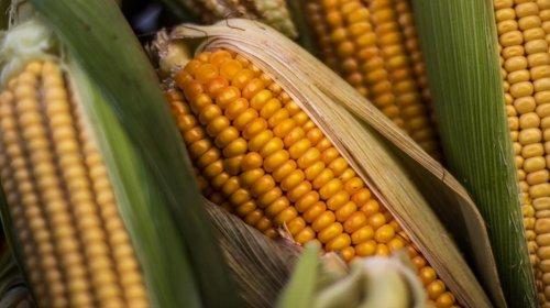 [Estimativa do IBGE indica que safra baiana de grãos em 2020 será a maior já registrada]