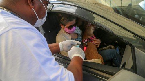 [Última semana do drive thru da vacinação antirrábica em Salvador]