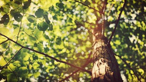 [Pernambués Curioso: Saiba mais sobre o Dia da Árvore]
