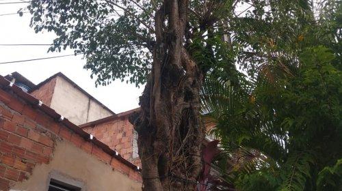 [Denúncia: moradores de Pernambués solicitam remoção de árvore que está danificando imóvel]