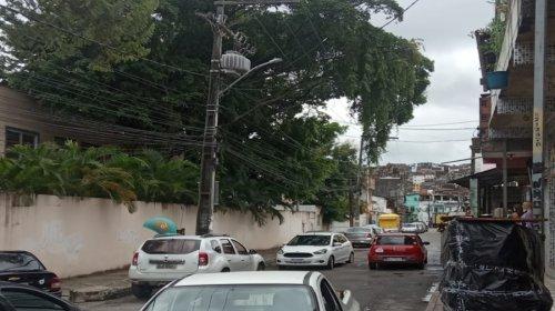 [Denúncia: Árvore de grande porte ameaça fios de alta tensão em Escola Municipal de Pernambués; veja vídeo]