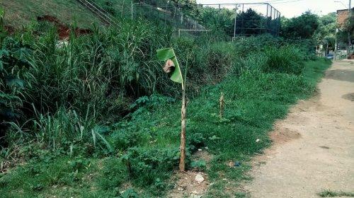[Veja vídeo: moradores denunciam a falta de limpeza e capinação em rua de Pernambués ]